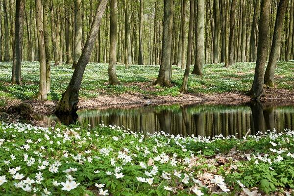Dzień lasu