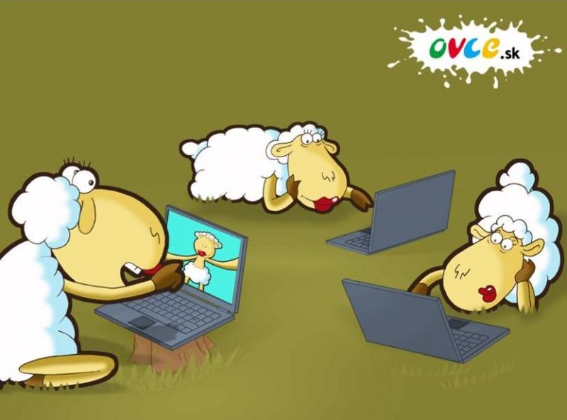 Owce w sieci